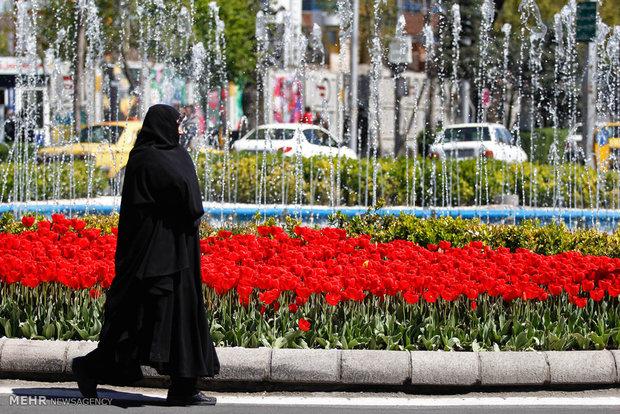 تبریز میزبان لاله ها