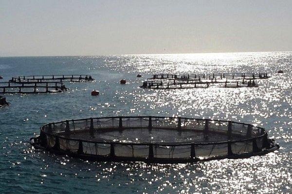 فعالیتهای آبزیپروری در کشور افزایش یابد/ لزوم کاهش صید