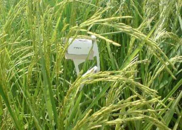 افزایش ۲۰ درصدی استفاده از عوامل بیولوژیک برای کنترل آفات گیاهی