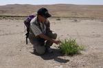 نجات دریاچه ارزشمند ارومیه