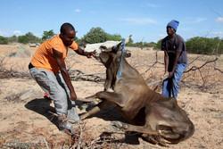 افریقہ میں خشک سالی
