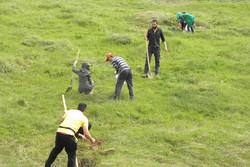 ۱۰۰۰ هکتار به ذخیرهگاه جنگلی همدان افزوده میشود/لزوم مشارکت مردم