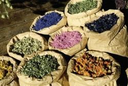 تولید دمنوش گل نسترن برای از بین بردن سنگ کلیه