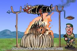 Kenya'da yakılan fildişleri!