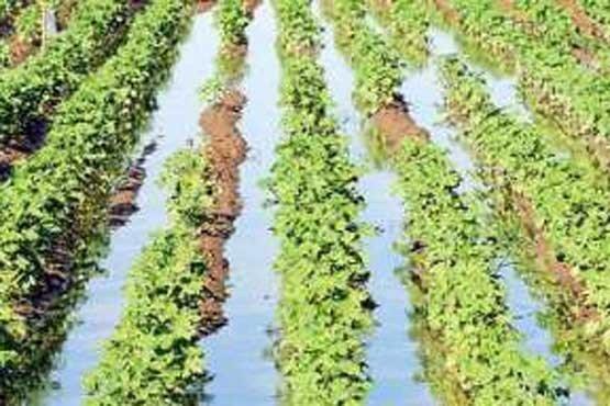 تلاش برای كشت محصولات فراسرزمینی به منظور كاهش مصرف آب كشاورزی