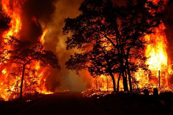 آتش سوزی در بیش از ۵۹۰۰ هکتار از جنگل های روسیه