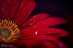 14. Uluslararası Tahran Çiçek ve Bitki Fuarı