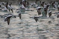 بازار پرندگان فریدونکنار تعطیل نشده است