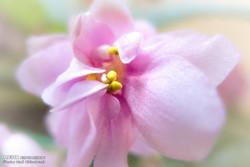 اپارٹمنٹ کےآرائشی  پھول اور پودے