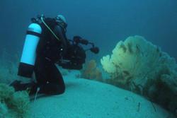 الروبوتات تحتل مكان غواصي البحر في رصد العمليات البحرية