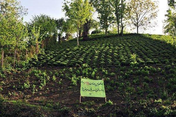 کراپشده - زمین کشاورزی