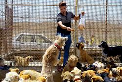 Hayat Animal Sanctuary