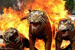 برترین تصاویر جهان در ۴ خرداد ۹۵
