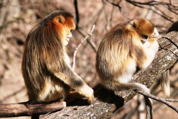 بھارت میں بندروں سے حملے سے 2 افراد ہلاک