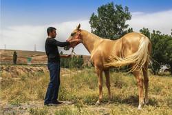 2nd National Turkmen Horse Festival