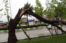 Iranian app predicts damages to trees
