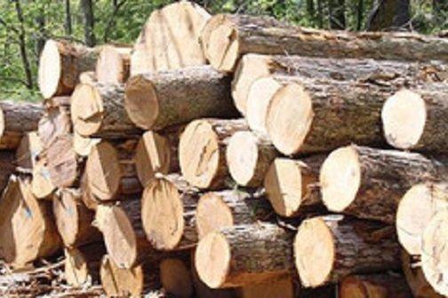 کراپشده - چوب قاچاق