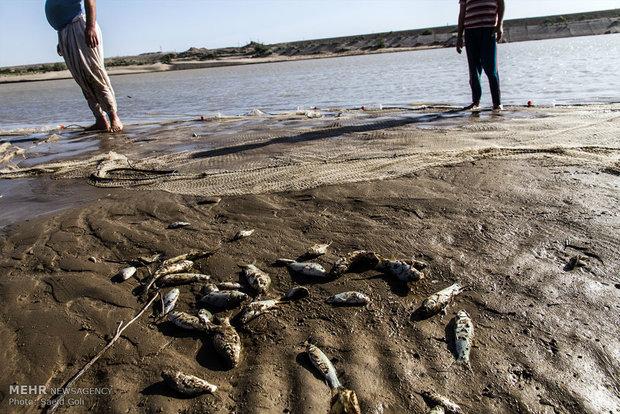 تلف شدن هزاران قطعه ماهی