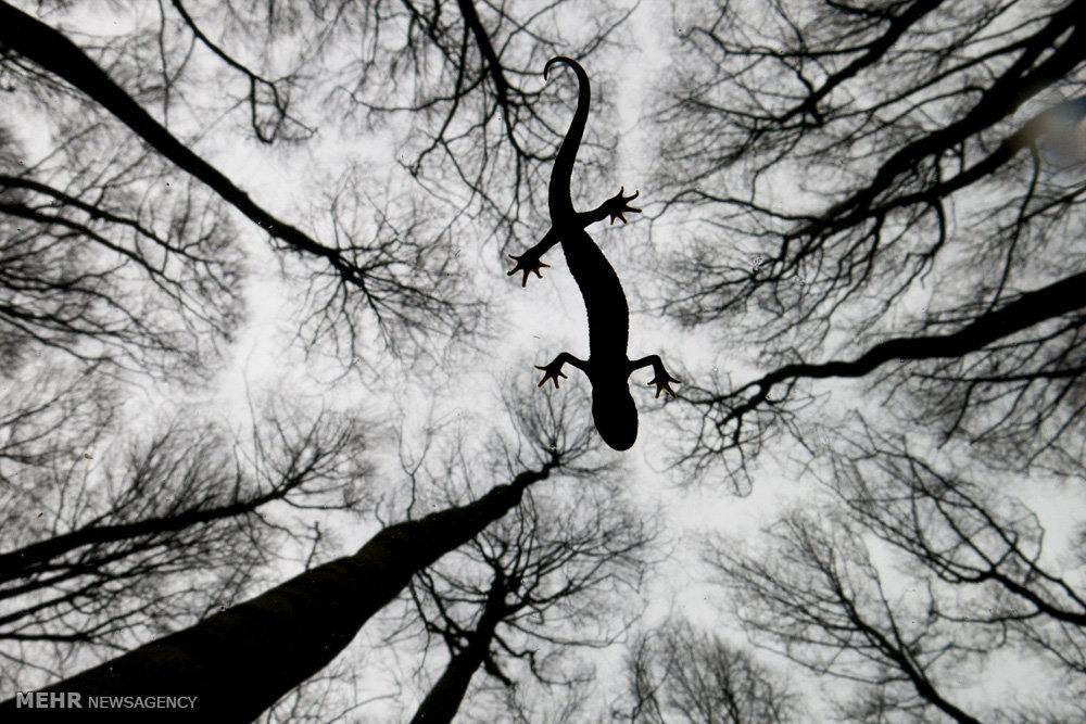 عکس های برندگان مسابقه حیات وحش سال
