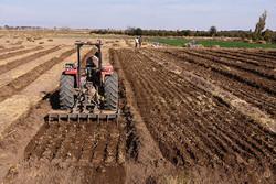 موقوفات کشاورزی آستانه مقدسه قم بیش از ۳۵۰۰ هکتار است