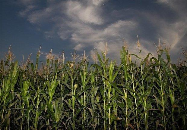 واریز مطالبات ۹۹درصد جوکاران/افزایش حجم معاملات محصولات کشاورزی