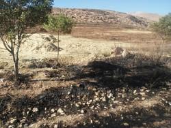 ۱۵۷۳هکتار از مراتع زنجان طی هشت ماهه سالجاری دچارحریق شده است