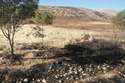 کراپشده - آتش سوزی مراتع و مزارع نهاوند 5