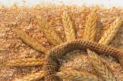 نانوذرات سیلیکا از ضایعات برنج تولید شد