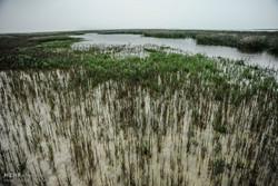 آشوراده را پایگاه ملی و بین المللی مطالعات زیست محیطی کنید