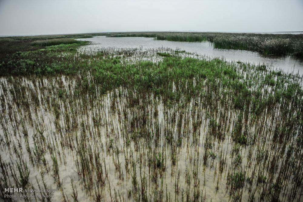 سرنوشت ارومیه در انتظار خلیج گرگان