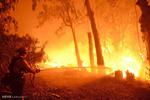 جنگل های بلوط اندیمشک آتش گرفتند