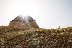 خرید ۳۲۵۰تن جواز قزاقستان جهت تأمین نهاده های دامی آذربایجان غربی