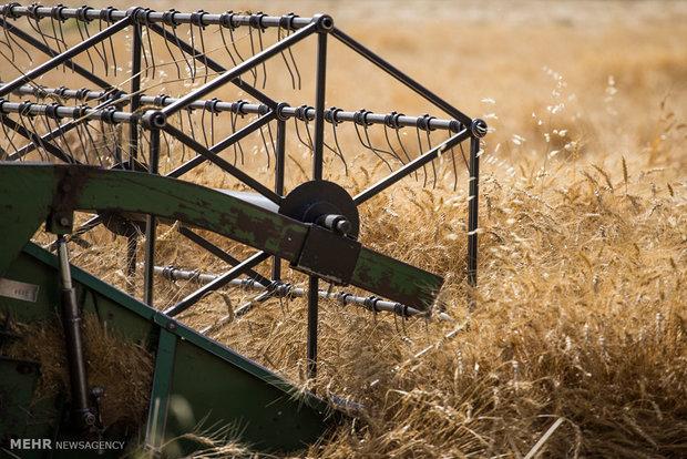 Wheat harvest in Iranم