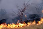 درخواست کمک برای مهار آتش سوزی پاسارگاد