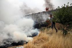 ۲۶۰ هکتار از مراتع استان زنجان دچار حریق شدند