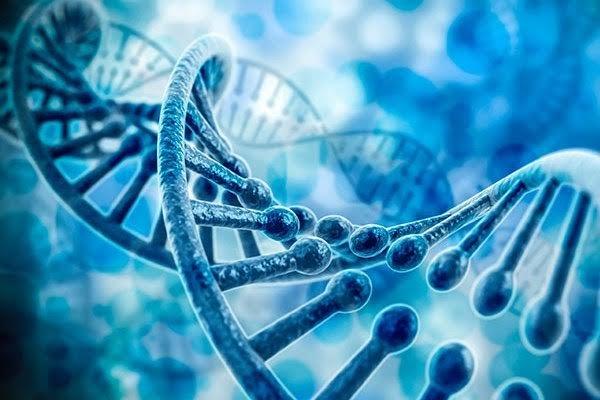 یک میلیارد و ۳۰۰ میلیون تومان هزینه اجرای طرح ژنتیک درخراسان رضوی
