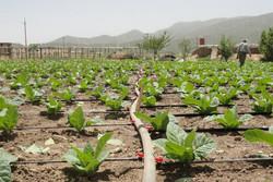 کشاورزی در شاهرود - آبیاری قطره ای - آبیاری نوین