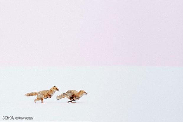 برندگان مسابقه عکاسی نشنال جئوگرافیک