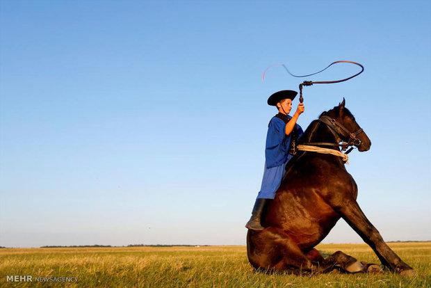 تعلیم اسب در مجارستان