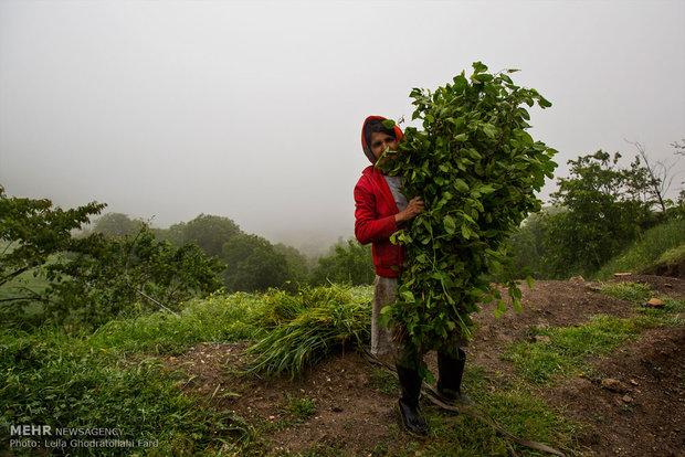 عمل المرأة في احضان الطبيعة