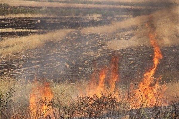 آتش در دامن زرد مزارع/ 45هکتار از مزارع کشاورزی اسفراین دود شد