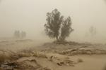 وزش باد شدید در منطقه سیستان/ رگبار پراکنده باران در بلوچستان