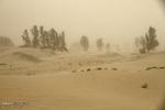 وزش باد شدید همراه با گرد و خاک در منطقه سیستان تداوم دارد