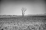 بحران آب نتیجه مدیریت نادرست است/نابودی تنوع زیستی در یزد