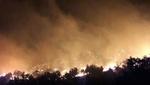 جریمه و حبس در انتظار آتشافروزان جنگلها