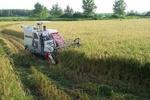 بخش  کشاورزی باید به سمت دانش بنیان سوق داده شود
