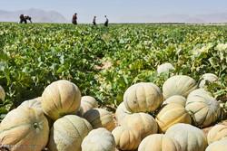 صادرات میوه از اصفهان به ترکیه و عراق