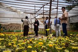 بام های سبز در قزوین ایجاد می شود
