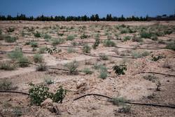 اختصاص ۹۰۰ میلیارد تومان برای مقابله با کانون های فرسایش بادی
