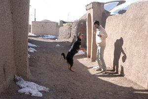 جولان حیوانات هار در هشتبندی/امنیت و سلامت مردم در خطر